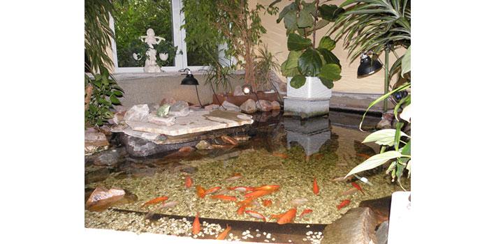 Pflegewohnzentrum wuhlepark pflegewohnzentrum for Goldfischteich pflege